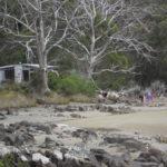 camping cockle creek.jpg