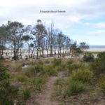little-beach-002.jpg