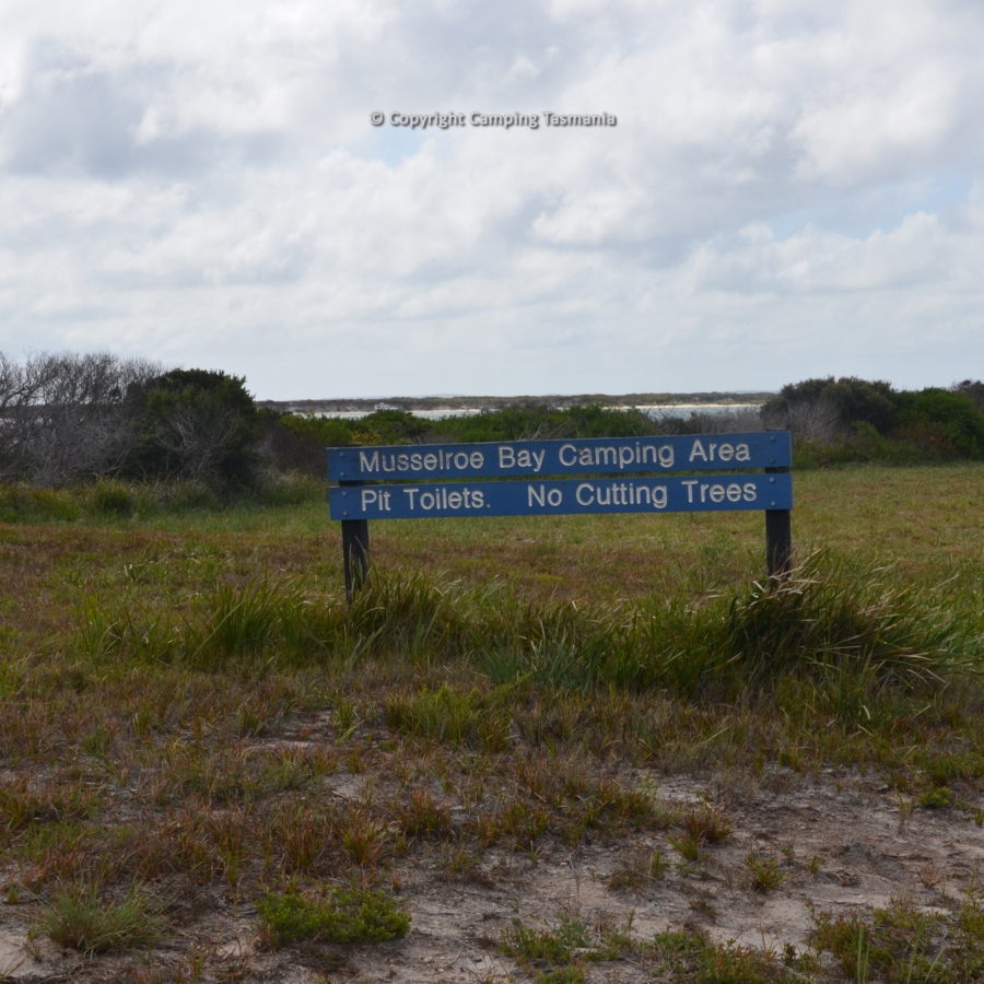 camping musselroe bay