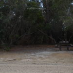 stumpys-4-004.jpg